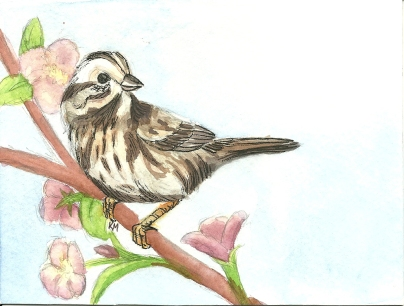 Birthday Sparrow0001